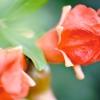 Вікторина «природна краса не знає віку»