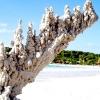 Ось такі скульптури залишаються після удару блискавки в пісок