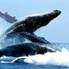 Всесвітній день захисту морських ссавців