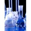 Набула чинності заборона тестування косметики на тваринах