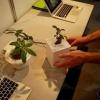 Wi-fi небезпечний - доведено на прикладі крес-салату