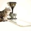 Дбайливий гаджет для кішок