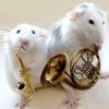Тварини і музика: вплив музики на тварин, тварини в музичним слухом