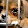 Тварини з притулків чекають вас 17 і 18 серпня в ЦДХ