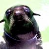 Тварини на фотографіях марини кано