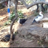 Кокетка або прийшла весна - прокинулися черепашки