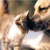 Собака врятував кішку від койотів