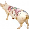 Татуювання на свинях