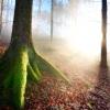 Фото. прекрасний світ з Тьєррі хеннетом.