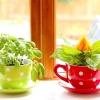 Кімнатні рослини - які вибрати для кухні