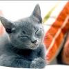 Чому кішки муркочуть